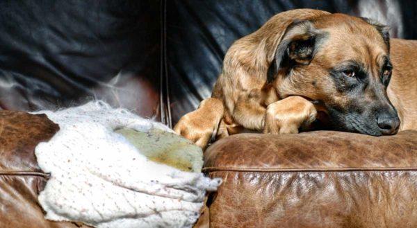 Как отучить домашних питомцев портить мягкую мебель